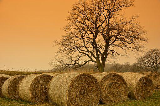 Straw Bales, Straw, Hay Bales, Harvest, Agriculture