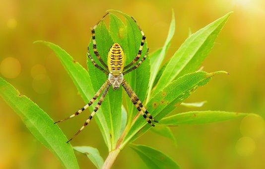 Tygrzyk Paskowany, Female, Arachnid, Insect, Animals