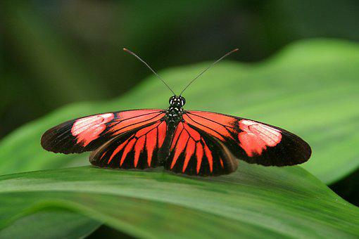 Butterfly, Nature, Insect, Animal, Wing, Butterflies