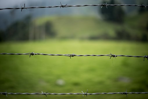 Barbed Wire, Fence, Nature, Green, Wire, Blur