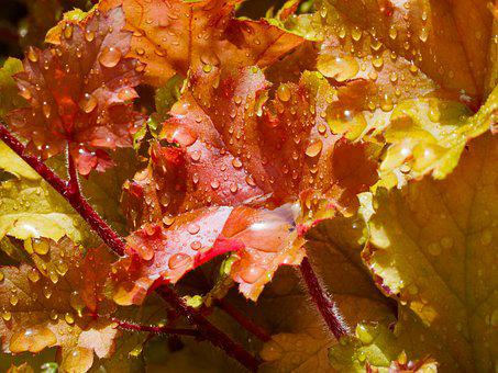 Autumn Leaves, Nature, Yellow, Carpet Of Leaves, Plant