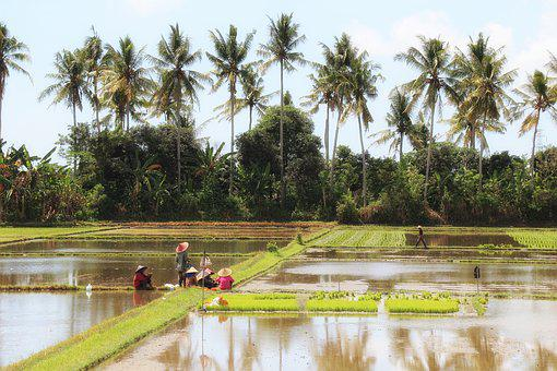 Bali, Landscape, Rice Field, Indonesia, Painting