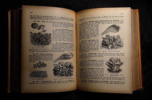 Antiquariat, Old Cookbook, Cookbook, Book