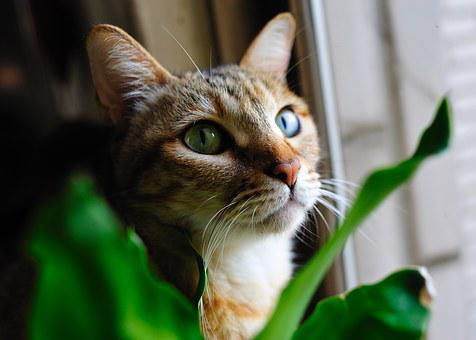 Cat, Pet, Cat's Eye, Reviews Online