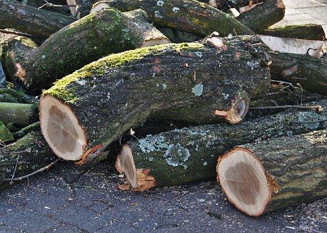 Felled Tree Trunks, Wood, Forest, Diseased Trees