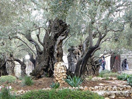 Gethsemane, Garden, Jerusalem, Israel, Religion