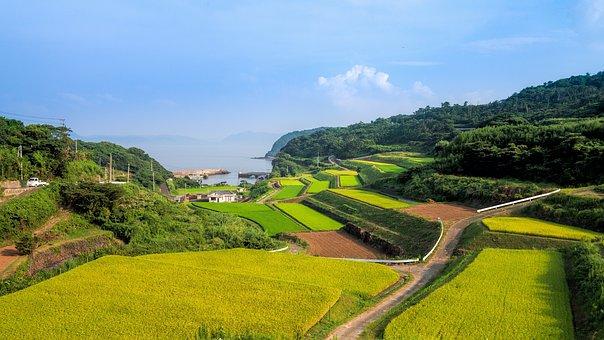 Terraced Fields, Japan, The Countryside, Tanaka