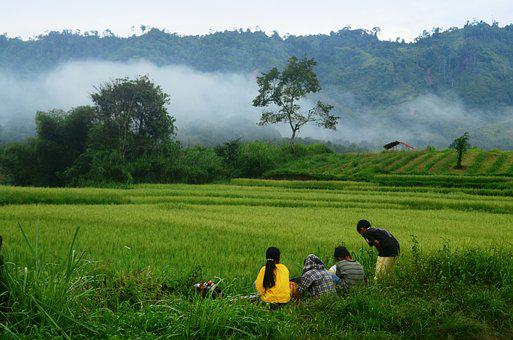 Field Rice, Kids, Mountains, Nature, Travel, Travelling