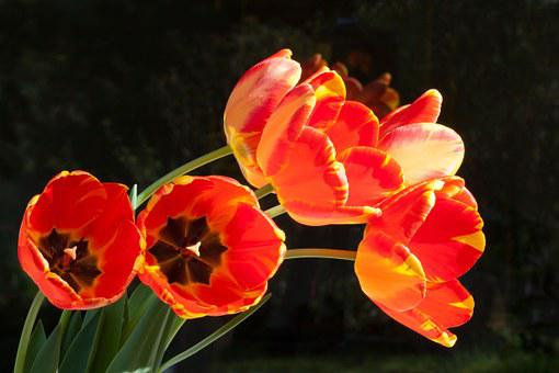 Tulips, Bouquet, Lily, Spring, Nature, Flowers