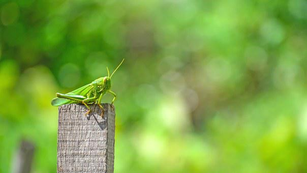 Grasshopper, Animal, Insects, Trees, Neck, Grass Tree