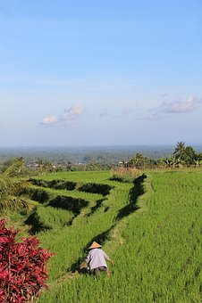 Bali, Rice Fields, Jatiluwih, Unesco World Heritage