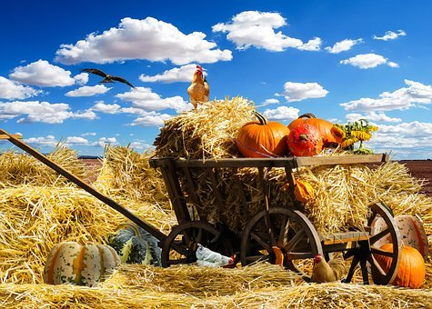 Thanksgiving, Autumn, Pumpkin, Harvest, September