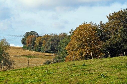 Landscape, Autumn, Nature, Trees, Plant, Sky, Green