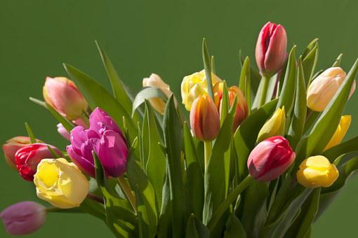 Tulips, Bouquet, Spring, Colorful, Nature, Flowers