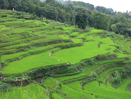 Yns Yuan Sun, Terrace, Landscape, Field