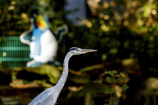 Heron, Bird, Nature, Animal, Grey, Fish Eater