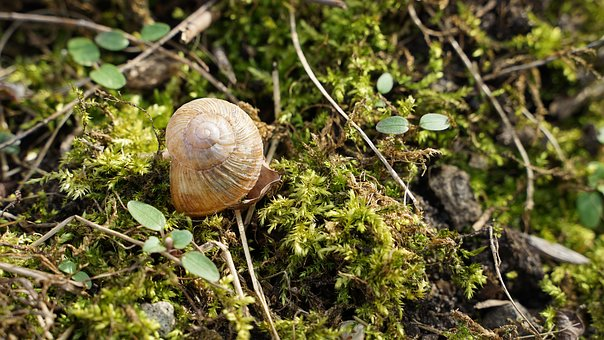 Shell, Background, Macro, Spiral, Nature, Animal World