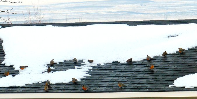 Animal, Bird, Robins, Flock, Snow, Roof, House, Odd