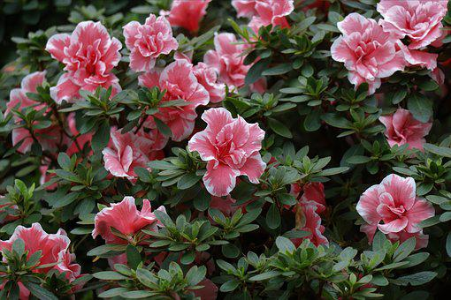 Flowers, Pink, Garden, Spring, Flower, Bloom, Bouquet