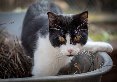 Cat, Animal, Pet, Domestic Cat, Animal Portrait