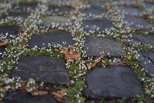 Paving Stones, Flowers, Cobblestones, Away, Patch