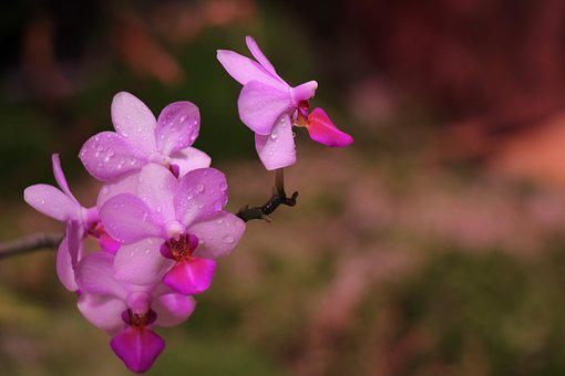 Orchid, Purple, Flower, Bloom, Flora, Exotic, Botanica