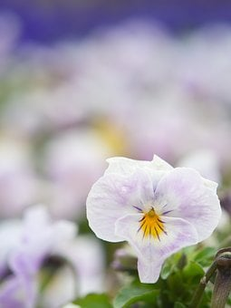 Flowers, Spring, White Flowers, Natural, Plant