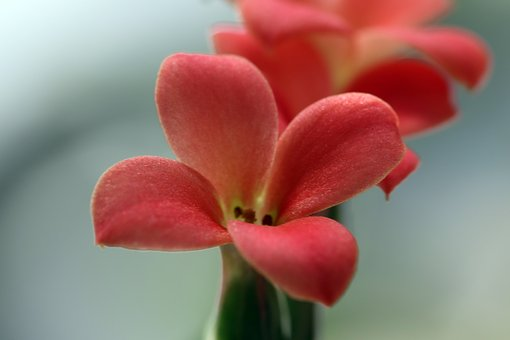 Mini Potted, Flowers, Potted Plant, Plants, Flower