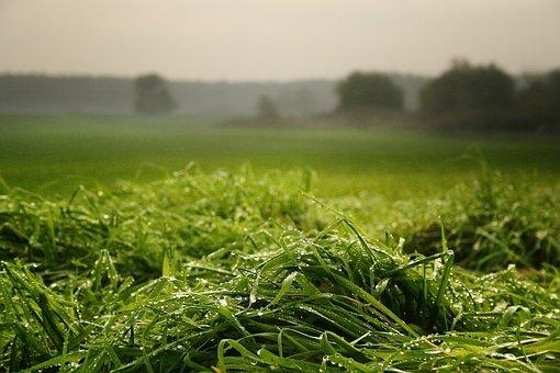 Morgentau, Meadow, Grass, Drip, Pasture, Wet, Raindrop