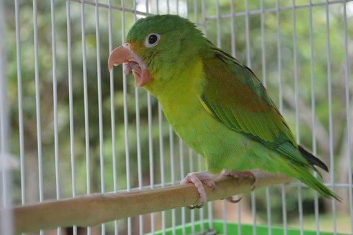 Animal, Nature, Cute, Small, Bird