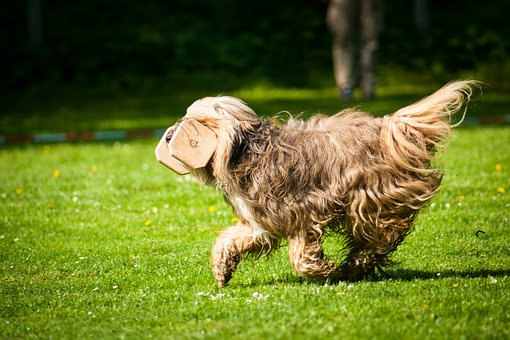 Dog, Race, Obedience, Bring, Hundesport, Apport