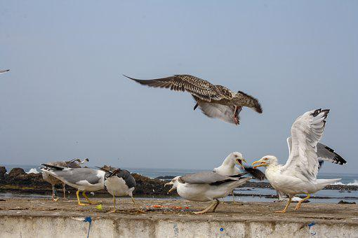 Bird, Fish, Seagull, Sea, Beach, Ocean, Animal, Coast