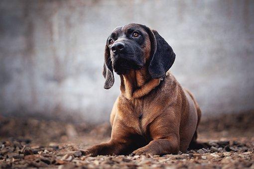 Dog, Animal, Animal Photography, Portrait, Cute, Brown