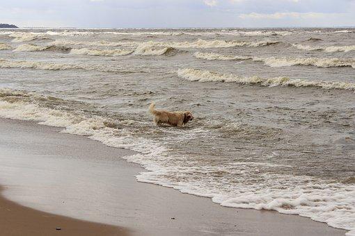 Dog, Retriever, Water, Wave
