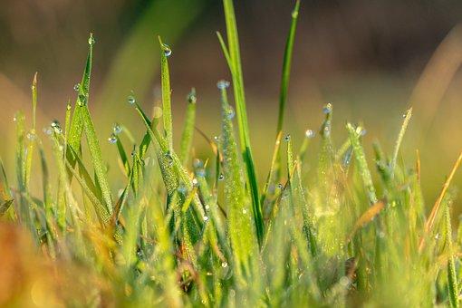 Spring, Morning Dew, Morning, Dew, Nature, Fresh