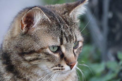 Cat, Beautiful, Animal, Portrait, View, Fur Leather
