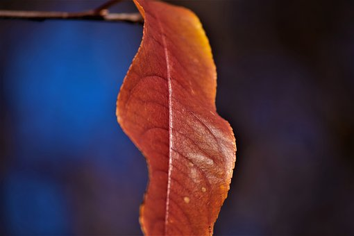 Leaf, Orange, Blur, Leaves, Autumn, Nature, Colorful