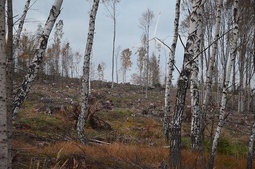The Jeseníky Mountains, Calamity, Bark Beetle, Nature