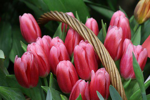 Tulips, Bouquet, Basket, Flowers, Spring, Pink, Red
