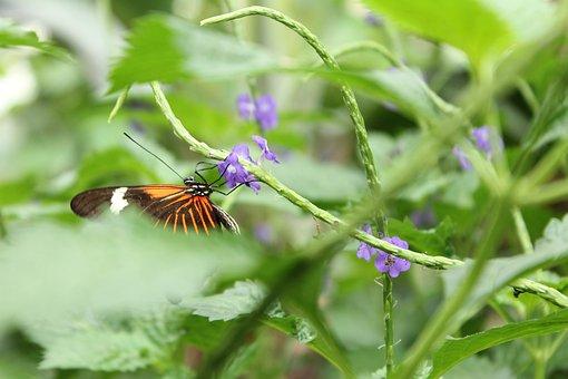 Butterfly, Purple Flower, Nature, Nectar, Summer
