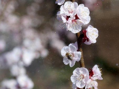 Flowers, White, Casey, Tree, Spring, Nature, Botanical