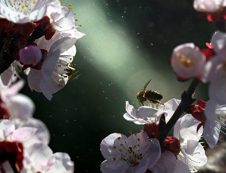 Flowers, Tree, White, Casey, Spring, Flourished, Nature