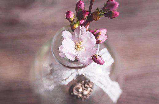 Cherry Blossoms, Branch, Pink, Spring, Cherry Blossom