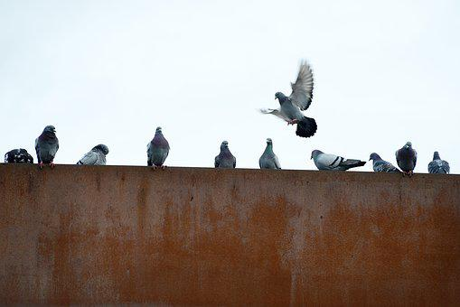 Pigeons, Rusty, City, Flying, Industry, Wall, Birds