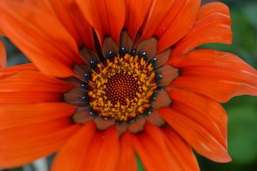 Orange, Spring, Garden, Flowers, Summer
