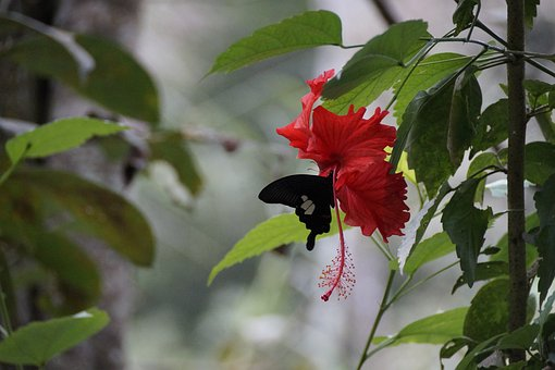 Blossom, Bloom, Butterfly, Red, Insect, Nature, Flower