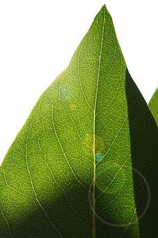 Leaf, Backlighting, Structure, Leaf Structure, Veins