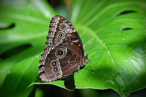 Nature, Butterfly, Insect, Macro, Animal, Leaf, Spring