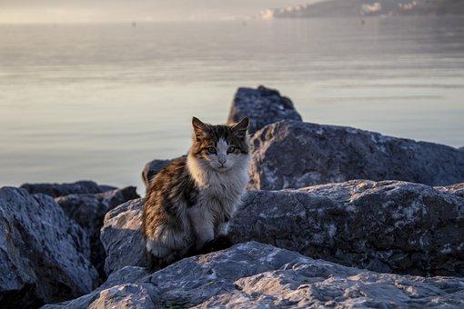 Cat, Animal, Beach, Marine, Sunset, Stone, Posing, Pose