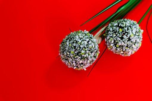 Flower, Red, Araki Red Background, Plant, Grass, Nature